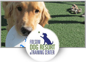 Jake Romero<br></noscript>Folsom Dog Resort